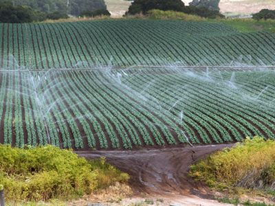 Agricultural runoff in California